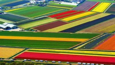 Polja tulipana