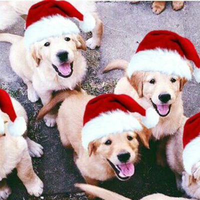 Christmas and dogs