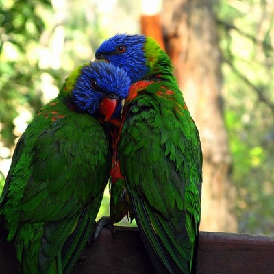 https://cdn.pixabay.com/photo/2015/09/19/13/01/rainbow-lorikeet-947196__340.jpg